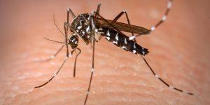 Cosmópolis tem 88 casos de dengue confirmados em 2019