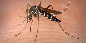 Cosmópolis registra 108 casos de dengue em 2019